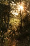 light_through_trees